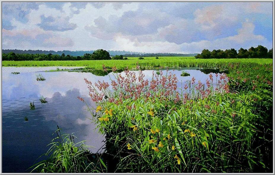 Картина из серии времена года - Летний пейзаж. Ставок за городом так и манет сьездить на рыбалку - картина с изображением ставка летом. Работа выполнена на холсте маслянными красками название картины - Цветущий камыш