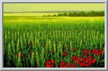 Будущий урожай